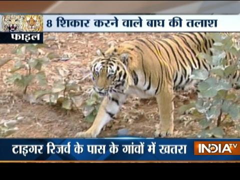 Caught On Camera: Leopard runs through Haryana's Amla causing chaos