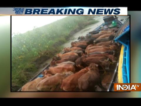 Cows being smuggled to Bangladesh from Assam, rescued by BSF India