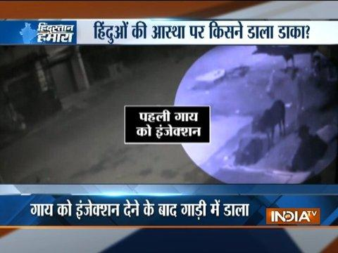 Hindustan Hamara: Cow theft caught in CCTV at Palghar, Mumbai