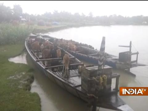 BSF rescues 70 cows being taken for smuggling through river route in Assam