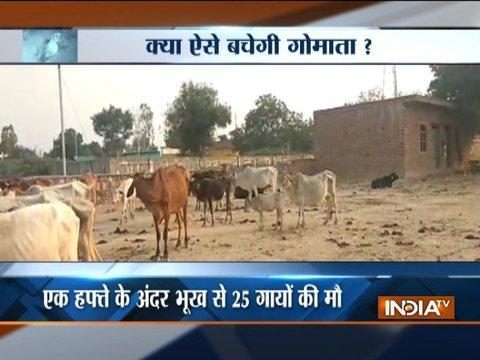 Uttar Pradesh: 25 cows starve to death at Gaushala in Mathura
