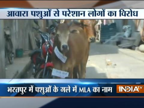 Rajasthan: Bharatpur people device unique way of protest against stray cattles