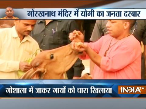 CM Yogi Adityanath feeds cows at a Gaushala in Gorakhpur, Uttar Pradesh