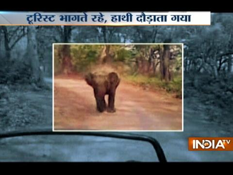 Angry elephant chases tourists at Jim Corbett National Park
