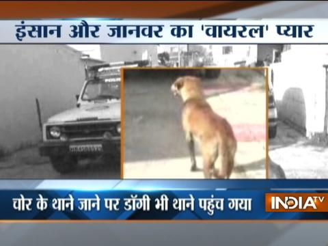 Know why Haryana Police had to arrest dog with his master, a thief in Karnal