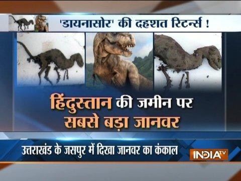 Skeleton like dinosaur found in Uttarakhand's Jaspur