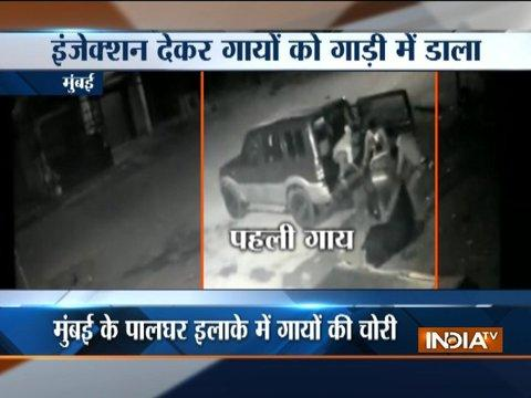 Mumbai: Cow smuggling caught on camera