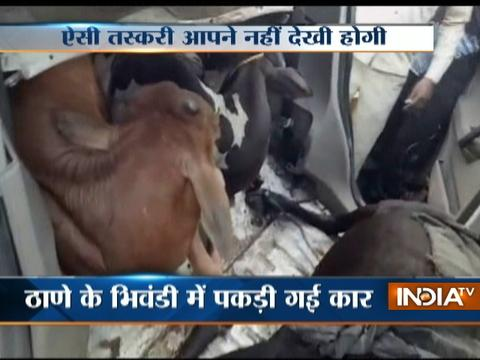 3 Cows recovered from a car in Thane