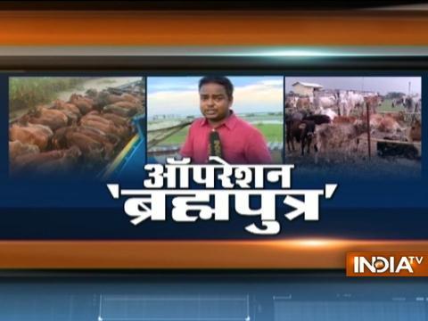Operation Brahmaputra: Watch how Cows Smuggled to Bangladesh on Floating Banana Stems