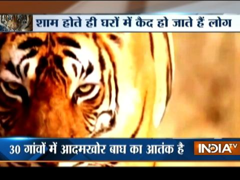 Man eating tiger has become an unlikely electoral issue in Uttar Pradesh's