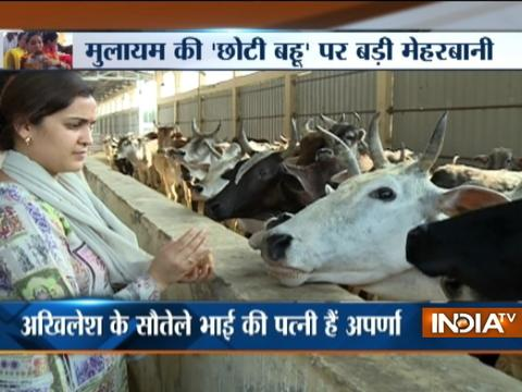 'Will probe if required', says UP govt on Aparna Yadav's NGO receiving 86 pc cow welfare fund