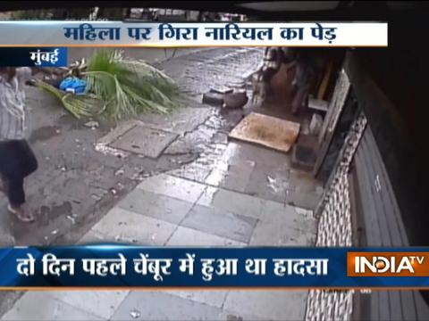 CCTV: Mumbai woman critically injured after coconut tree falls on her