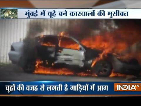 Mumbai: Rats behind most cases of vehicle fire, says study