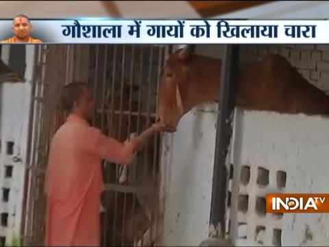 CM Yogi Adityanath visits cow shelter in home turf Gorakhpur