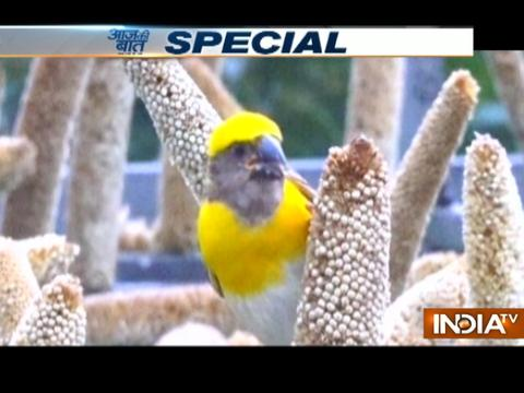 Aaj Ki Baat Good News: Meet the man who is feeding hungry birds for last 17 years