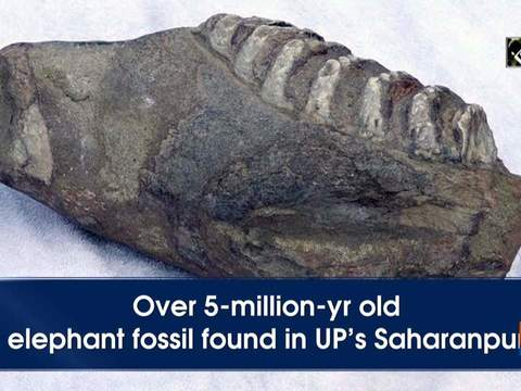 Over 5-million-yr old elephant fossil found in UP's Saharanpur