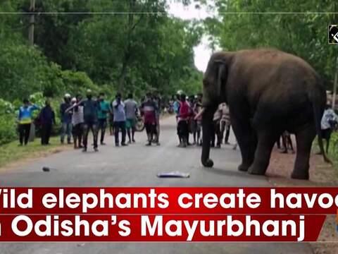 Wild elephants create havoc in Odisha's Mayurbhanj
