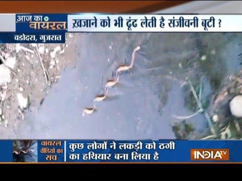 Aaj ka viral: Magical powers of Garud Sanjeevni root revealed