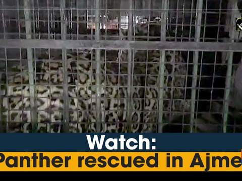 Watch: Panther rescued in Ajmer