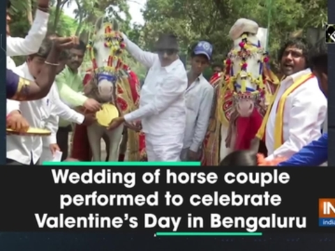 Wedding of horse couple performed to celebrate Valentine's Day in Bengaluru