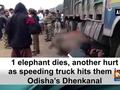 1 elephant dies, another hurt as speeding truck hits them in Odisha's Dhenkanal