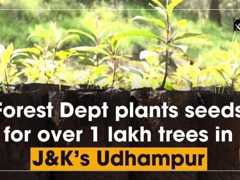 Forest Dept plants seeds for over 1 lakh trees in JK's Udhampur