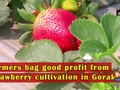 Farmers bag good profit from strawberry cultivation in Gorakhpur