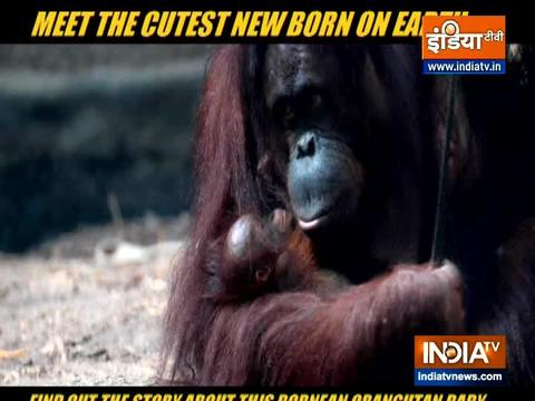 Meet the cutest new born on earth and it's not a human