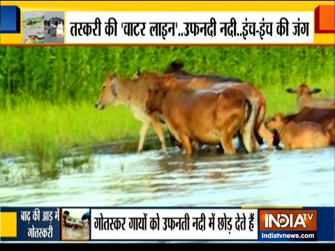 देखिये भारत से बांग्लादेश तक मवेशी तस्करी पर इंडिया टीवी की एक्सक्लूसिव रिपोर्ट