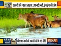 Watch India Tv's EXCLUSIVE report on Cattle Smuggling from India to Bangladesh