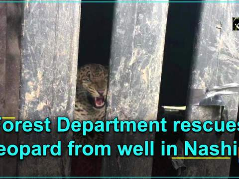 Forest Department rescues leopard from well in Nashik
