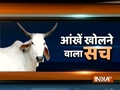 Watch India TV's special show on pathetic conditions of cows