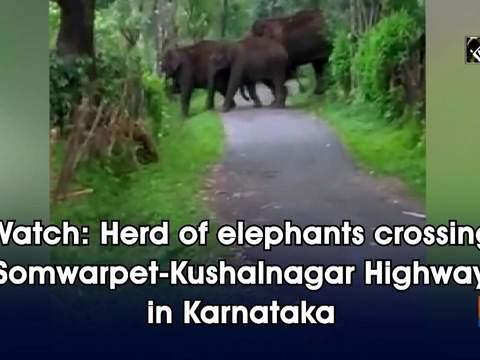 Watch: Herd of elephants crossing Somwarpet-Kushalnagar Highway in Karnataka