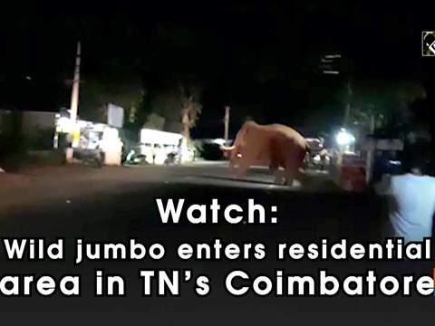 Watch: Wild jumbo enters residential area in TN's Coimbatore