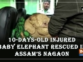 10-days-old injured baby elephant rescued in Assam's Nagaon