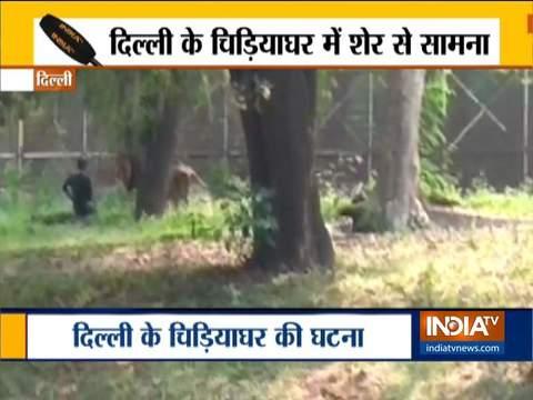 देखिये, क्या हुआ जब दिल्ली के चिड़ियाघर में शख्स का हुआ शेर से आमना-सामना