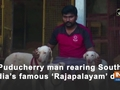 Puducherry man rearing South India's famous 'Rajapalayam' dogs