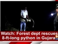 Watch: Forest dept rescues 8-ft-long python in Gujarat