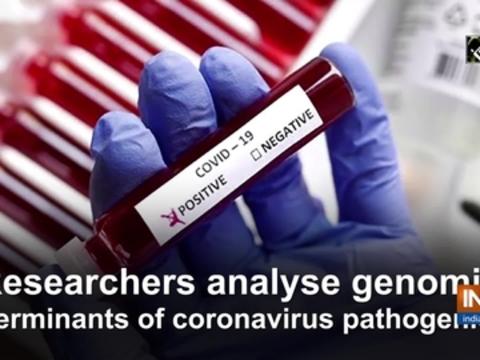 Researchers analyse genomic determinants of coronavirus pathogenicity