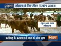 CM Yogi Adityanath sanctions Rs 1.20 crore for cow shelters in UP