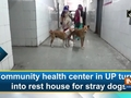 Community health center in UP turns into rest house for stray dogs