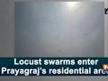 Locust swarms enter Prayagraj's residential area