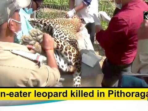 Man-eater leopard killed in Pithoragarh
