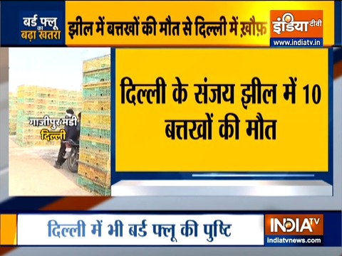 VIDEO: Bird flu confirmed in Delhi, all 8 duck samples tested positive