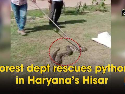 Forest dept rescues python in Haryana's Hisar