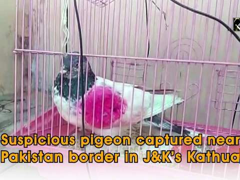 Suspicious pigeon captured near Pakistan border in J&K's Kathua