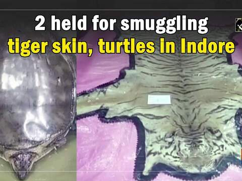 2 held for smuggling tiger skin, turtles in Indore
