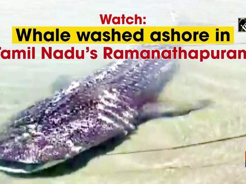 Watch: Whale washed ashore in Tamil Nadu's Ramanathapuram