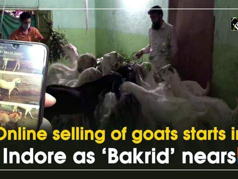 Online selling of goats starts in Indore as 'Bakrid' nears