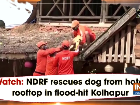 Watch: NDRF rescues dog from hotel rooftop in flood-hit Kolhapur
